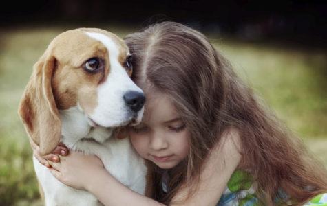 The Love of My Dog Chloe